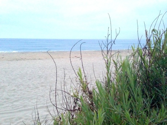 beach walk w bret