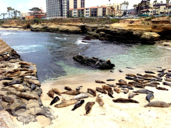 la jolla seal beach 1
