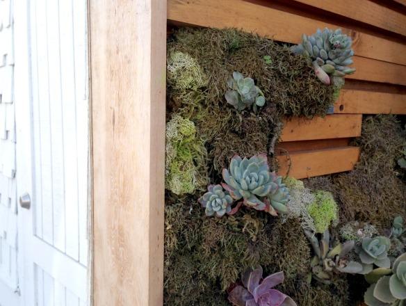 cacti wall 2.jpg