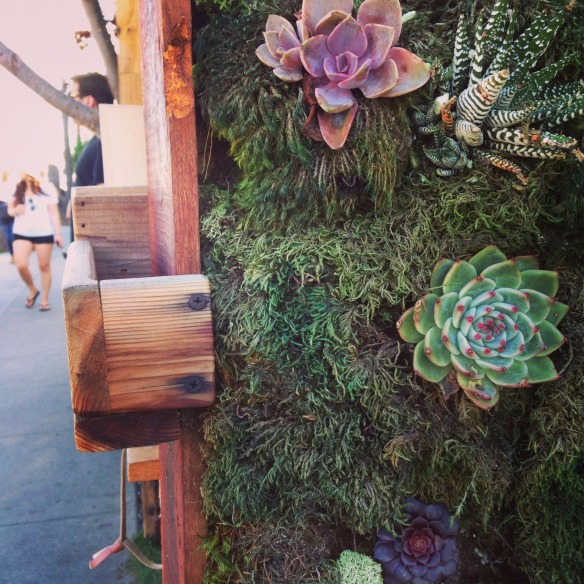 cacti wall.jpg
